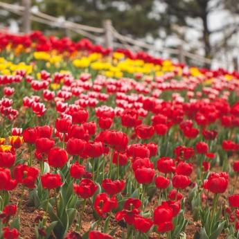 Springtime in Geoje